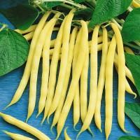 Seminte fasole oloaga 100 gr